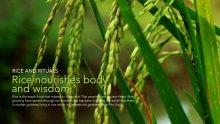 <!--:en-->Rice and Rituals<!--:--><!--:th-->ข้าวและพิธีกรรม<!--:-->